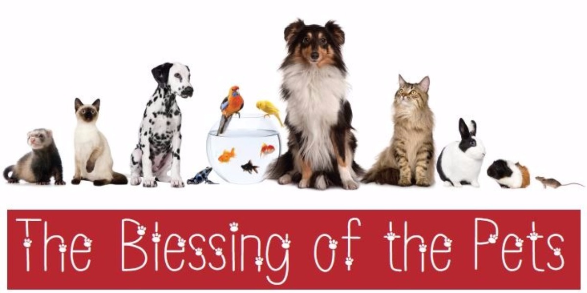 Image result for pet blessing